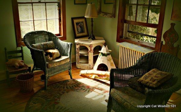 domino-catnap-indoors-cat wisdom 101