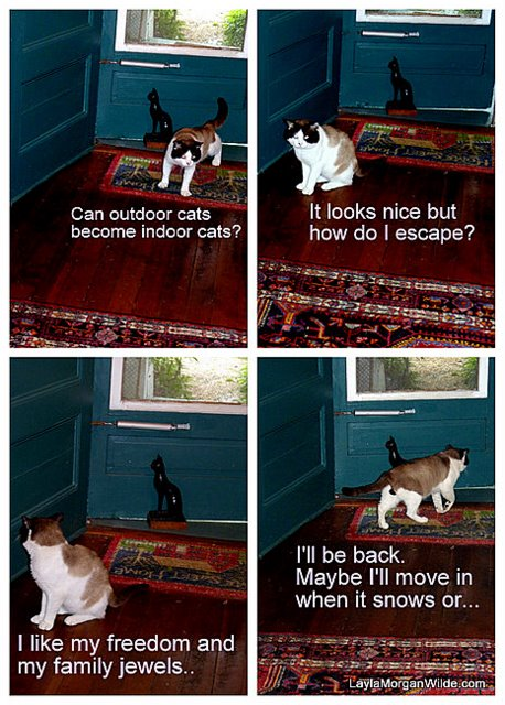domino-indoors-cat wisdom 101