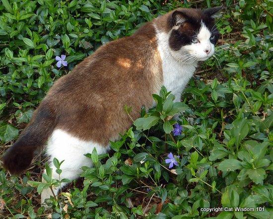 domino- spring-cat wisdom 101