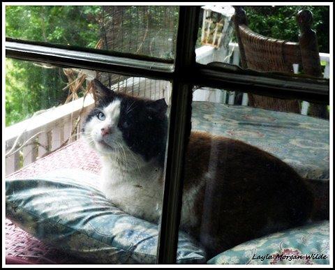domino-window-cat-wisdom-101 FIV+ Former Feral Domino's 15th Birthday