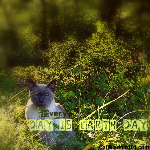 earth-day-cat-garden-green-eco-cat wisdom 101