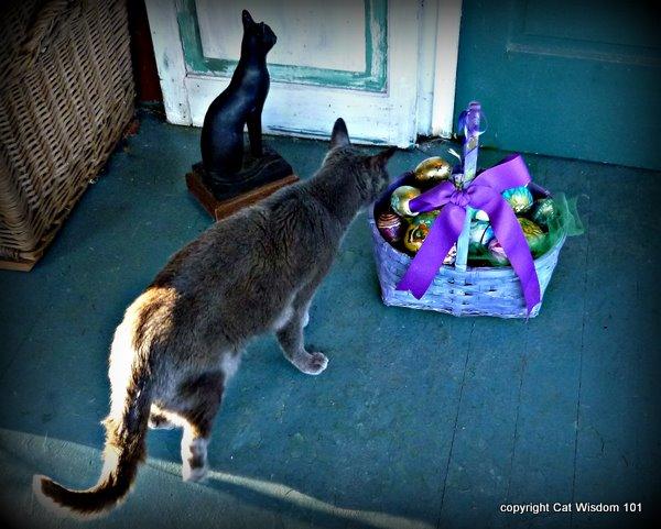 easter-egg-basket-cat-catwisdom 101