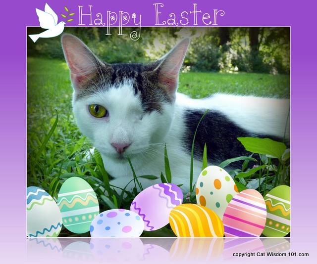 easter-egg-art-cat-cat wisdom 101