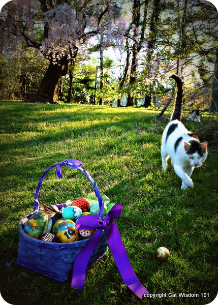 easter-egghunt-cat wisdom 101-cats