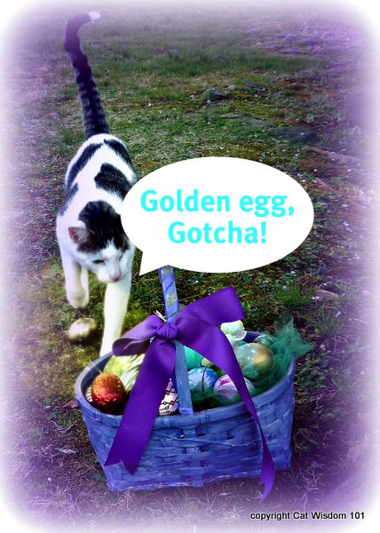 easter-golden egg hunt-cat-cat wisdom 101