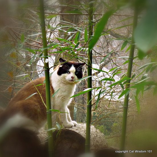 easter-hunt-cat-art-cat wisdom 101