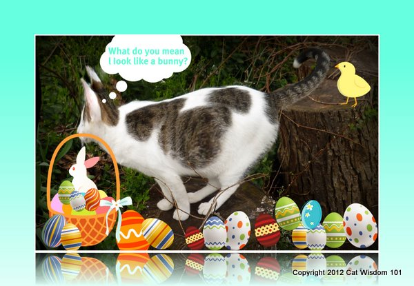 easter-lol-cat-bunny-eggs
