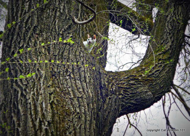 easter-tree-cat-catwisdom101-egg hunt