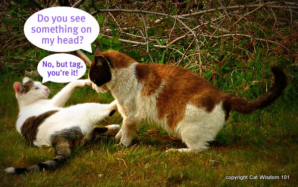 flea-tick cats-catwisdom101-vet-advice