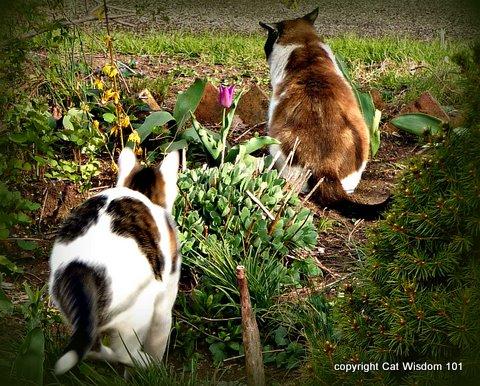 garden-cats-cat wisdom 101