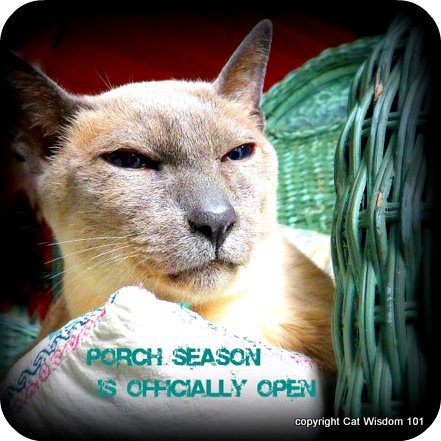 merlin-cat-porch-season-cat wisdom101-mancat mondays