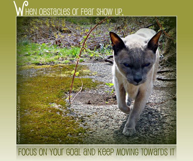 merlin-cat wisdom 101-quote-fear-obstacles-oprah