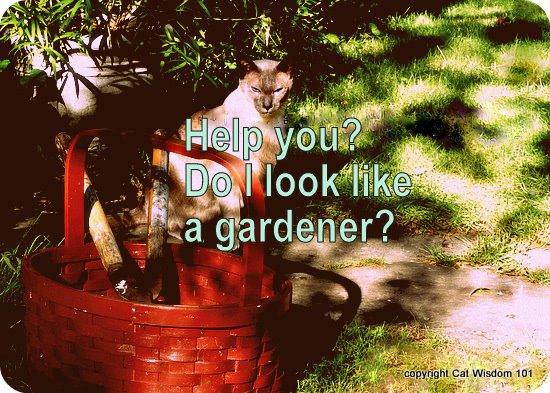 merlin-mancat mondays-cat wisdom101-gardening
