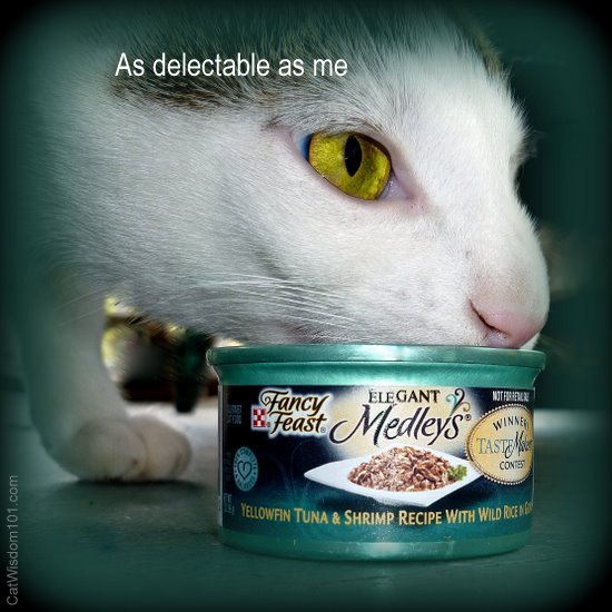 purina-fancy feast-cat wisdom 101-odin-delectable-giveaway