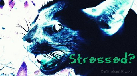 stress-cat-art-behaviorist