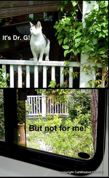 vet-odin-mobile-clinic-cat wisdom 101