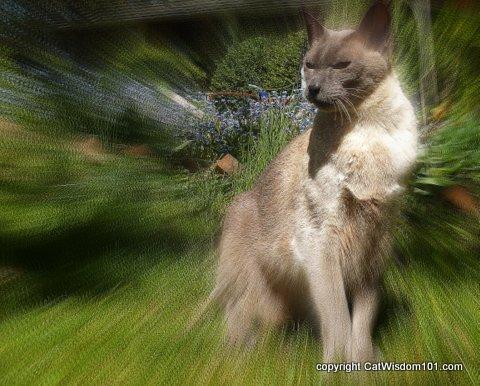 vet-visit-merlin-cat wisdom101-art-feline