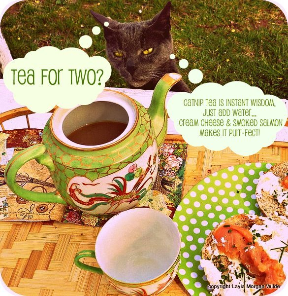 zen-tea-tuesday-cat-smoked salmon-cat wisdom
