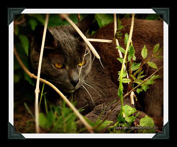 GG-cat-hiding-gris gris-garden