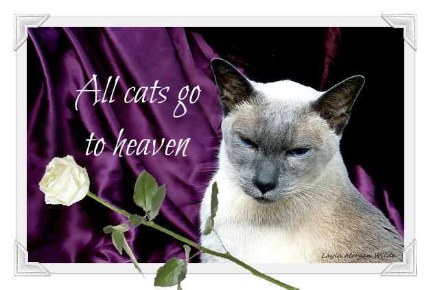 Monday-merlin-cat-wisdom-quote-heaven