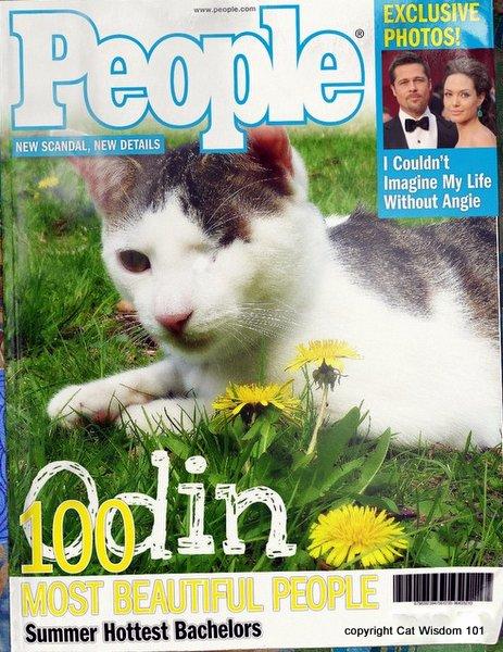 cat-People-magazine-cats-humor-gemini-astrology