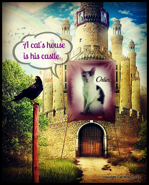 cat's house is his castle-odin-quote-art-cat wisdom 101