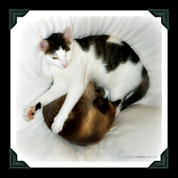 brother-cats-brotherly-love-cute-napping