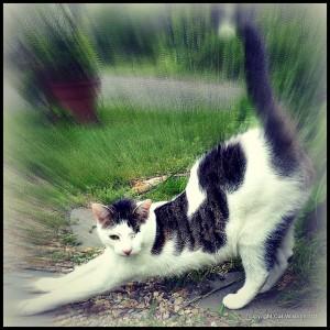 cat-odin-stretch
