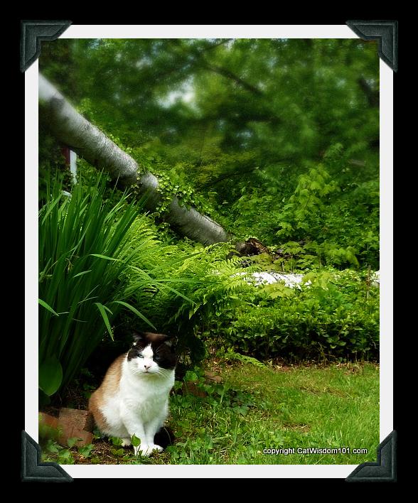 domino-garden-meditation-nature-cat