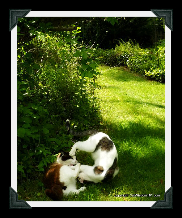 domino-odin-cats-wrestling-garden
