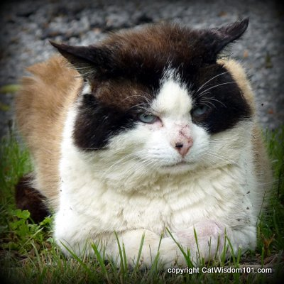domino-post-recovery-abscess-cat