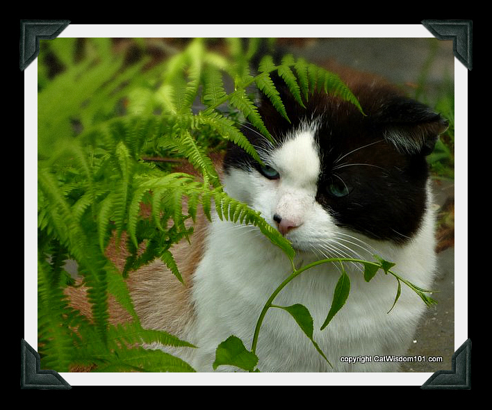 domino-smell-garden-cat-ferns-cat wisdom 101