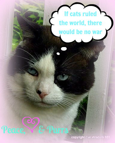 Memorial Day Cat Style Cat Wisdom 101 Creating Purrs