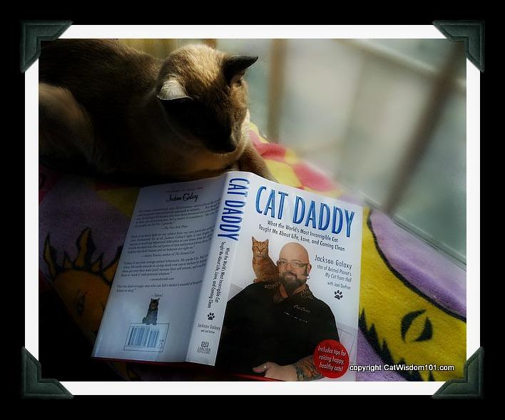 merlin-cat daddy-book-jackson-galaxy-memoir-giveaway-cat