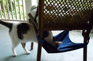 odin-chair-001-300x197 Kitty Cradle Hammock Giveaway