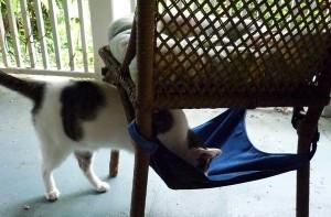odin-kitty-cradle