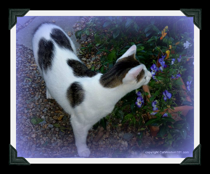 odin-flowers-smell-cat-pansies