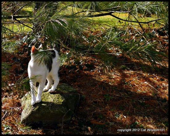 pine-tree-cat-sniff-cat wisdom 101-odin