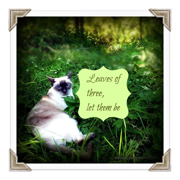 poison-ivy-cat-garden-vet-101