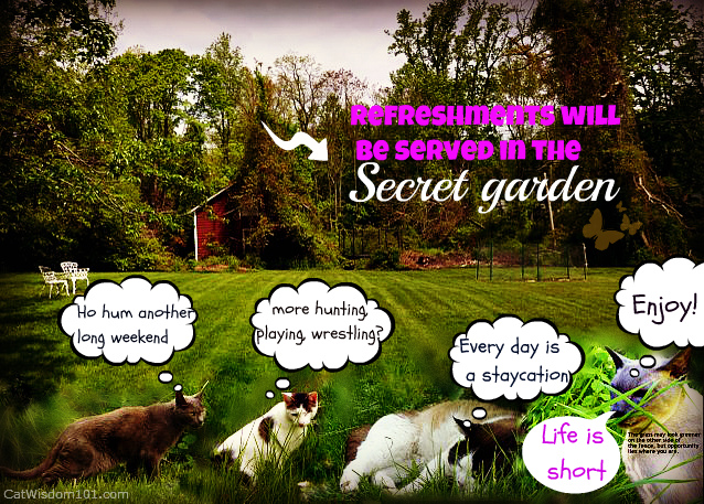 secret garden-cats-memorial day-cat wisdom 101