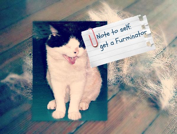 shedding-cat-vet 101-cat wisdom 101