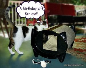 skratch-kabin-cat-bed-giveaway
