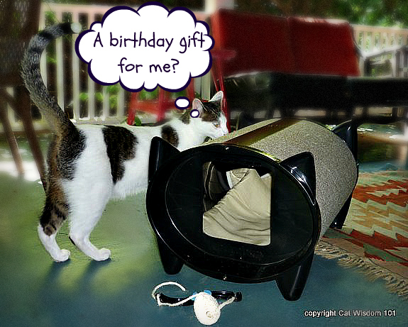 skratch-kabin-cat-bed-giveaway-001 Cat Wisdom101 Celebrates 1st Anniversary & KatKabin Giveaway