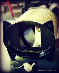 skratch-kabin-cat-bed-scratcher