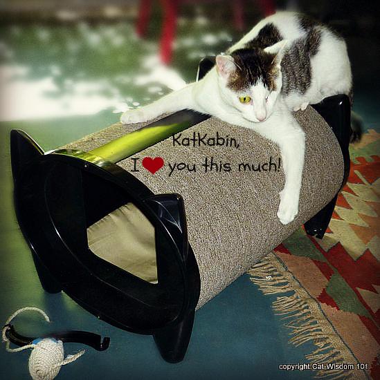 skratch-kabin-katkabin-catbed Cat Wisdom101 Celebrates 1st Anniversary & KatKabin Giveaway