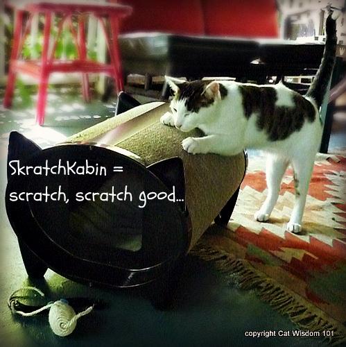 skratch-kabin-scratch-giveaway Cat Wisdom101 Celebrates 1st Anniversary & KatKabin Giveaway