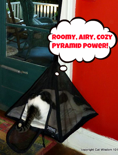 sturdi-products-cat-pyramid-pets