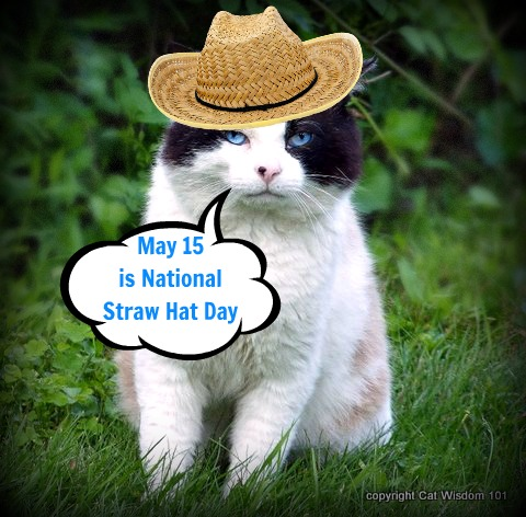 cat-national-straw-hat-day-LOL