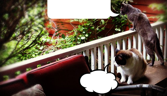 watch-cats-caption-humor