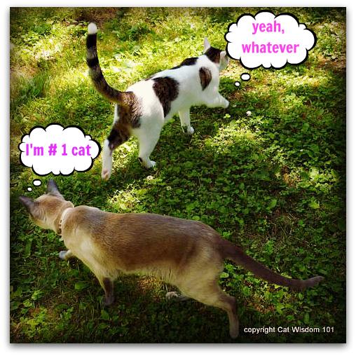#1 cat-merlin-friends-odin